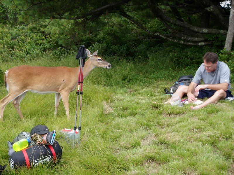 Deer wants george lunch