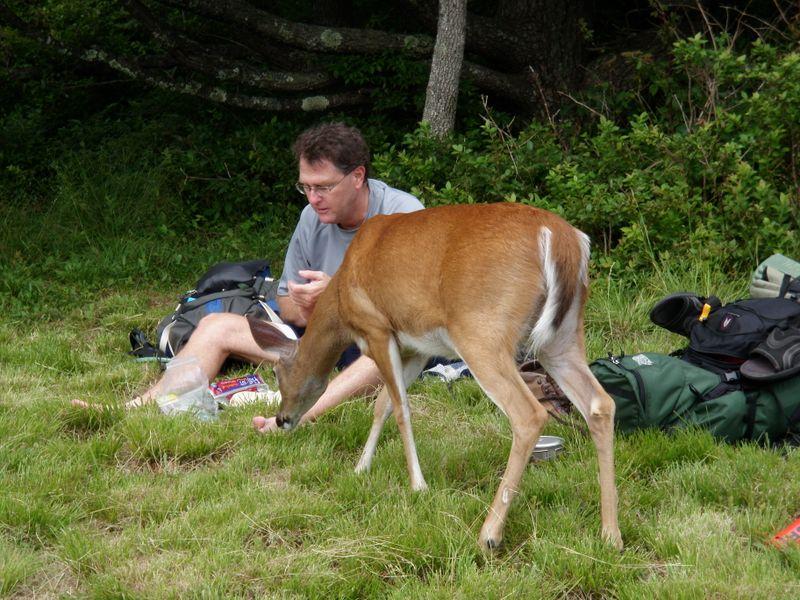 Deer sneaking up
