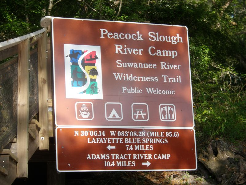 Peacock slough