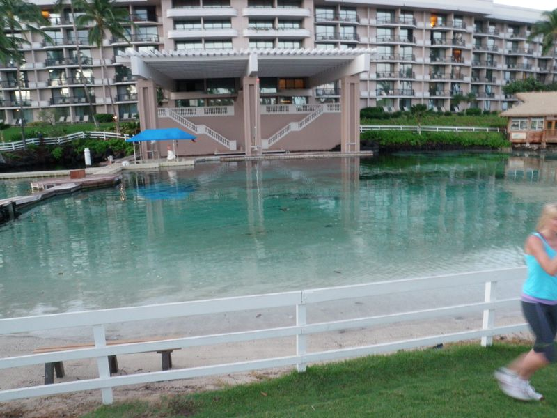 Dolphin pool